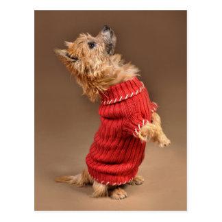 Leuke Steenhoop Terrier Briefkaart