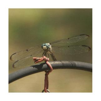 Libel, de Houten Druk van de Foto Hout Afdruk