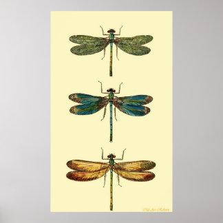 Libellen Poster