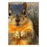 Liefde Squirrel_ Kaart