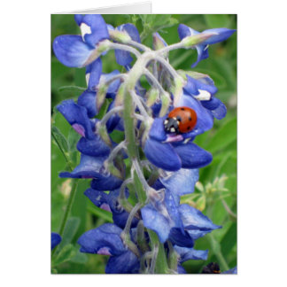 Lieveheersbeestje op Texas Bluebonnet Kaart