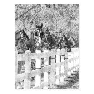 Lijn van Zwart-witte Paarden Amish Briefkaart