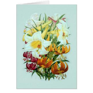 Lilium speciies briefkaarten 0