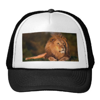 lion-794962.jpg trucker cap