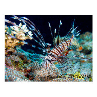 Lionfish op het Grote Briefkaart van het