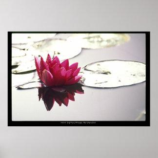 lotusbloem poster