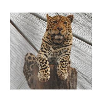 Luipaard op een groot logboek die vreedzaam kijken canvas afdruk