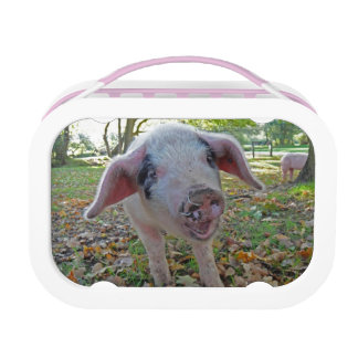 Lunchbox van het varken