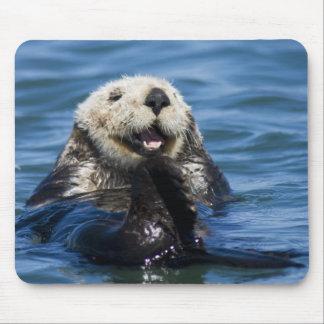 Lutris) bruidegoms van de Otter van het Zee van Ca Muismat