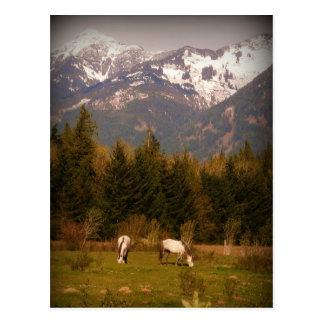 Maak een Wens op een Wit Paard! Briefkaart