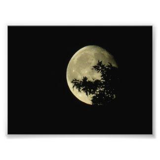 maan en boom foto prints