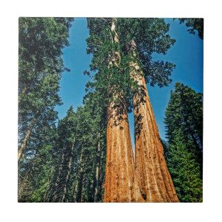 Machtige Californische sequoia Keramisch Tegeltje