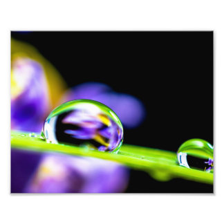 Macro Daling van Water op de Paarse Bloem van het Foto Afdruk