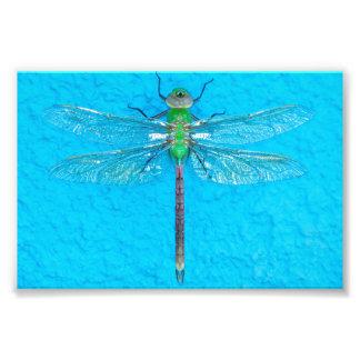 Macro Groene Libel op Blauwe Achtergrond Foto Afdruk