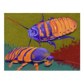 Madagascar Hissers - Kakkerlakken Briefkaart