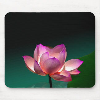Magenta Lotus in volledige bloei, mousepad Muismat