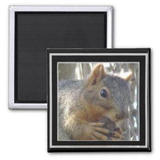 Magneet - Eekhoorn in Zwart Lijst
