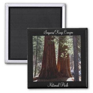 Magneet van het Park van de sequoia/van de Canion