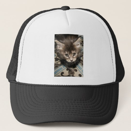 Maine Coon kitten Trucker Pet