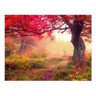 Majestueus Landschap met de Bomen van de Herfst in Briefkaart