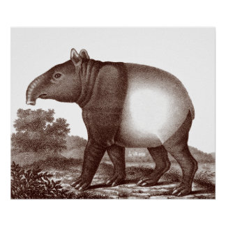 Maleise Tapir in een Landschap van Antiek Druk Poster