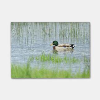 Mannelijke wilde eendeend die op het water drijven post-it® notes
