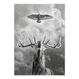 Mannetje en Eagle Foto Afdruk