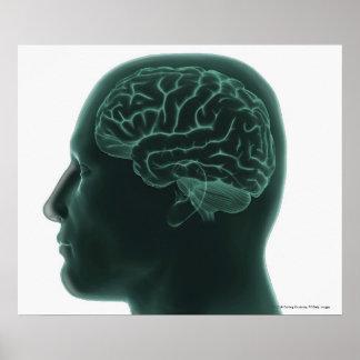 Menselijk hoofd in profiel die de hersenen tonen poster