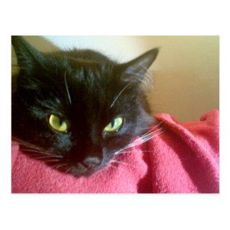 Merlin het Briefkaart van de Kat