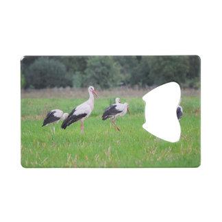 Migrerende witte ooievaars, ciconia, in een weide creditkaart flessenopener