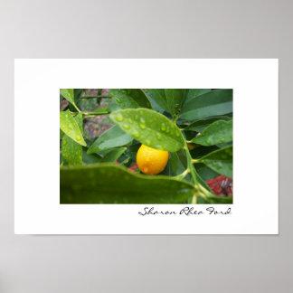 Mijn Eerste Kumquat door SRF Poster