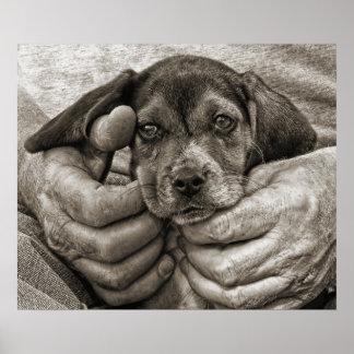 Mijn Fotografisch Art. van het Puppy van de Brak Poster