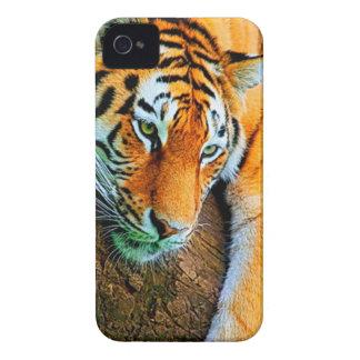 Mijn-melkweg-Note2-behang-HD-Animals%20 (128) .jpg iPhone 4 Hoesje