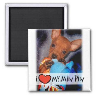 Miniatuur Magneet Pinscher