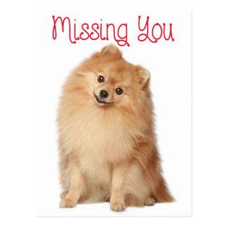 Misser You Pomeranian Puppy Dog het Briefkaart van