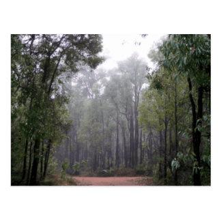 Mist & Eucalyptussen Briefkaart