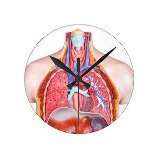 Model intern menselijk lichaam op witte ronde klok medium