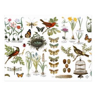 moderne vintage Franse botanische vogels en Briefkaart