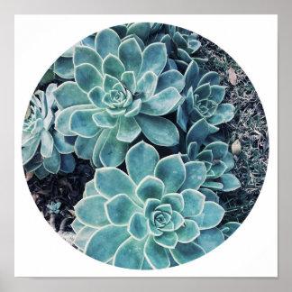 Modieuze Bleek - het groene Succulente Poster van