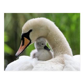 Moeder en de Zwaan van het Baby Briefkaart