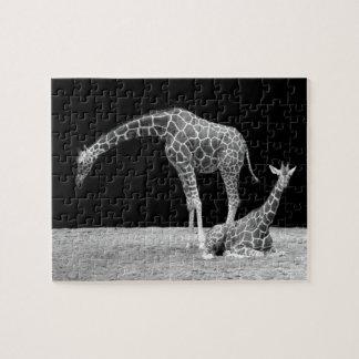 Moeder en zwart-witte babygiraffen foto puzzels