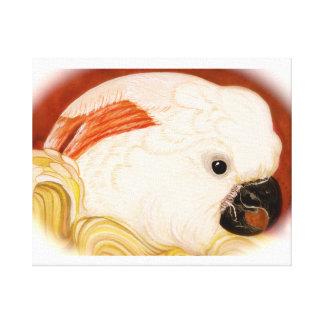 Moluccan Kaketoe Canvas Afdruk
