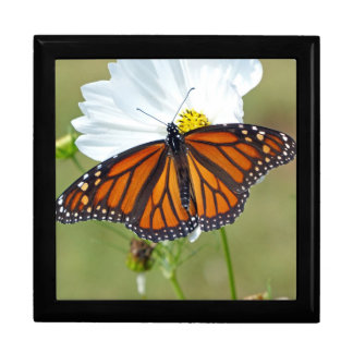 Monarch op Kosmos Decoratiedoosje