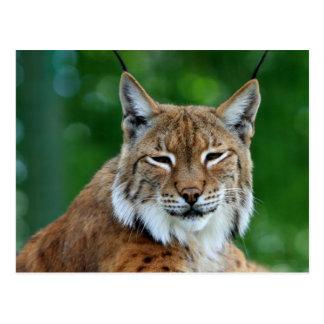 Mooi de fotobriefkaart van Bobcat of van de Lynx Briefkaart