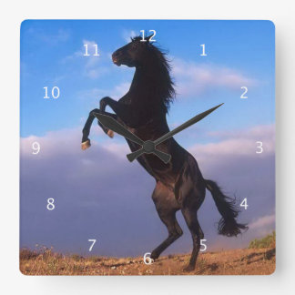 Mooi het grootbrengen zwart paard met blauwe hemel vierkante klok
