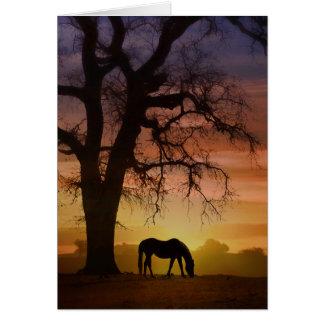 Mooi Paard in de Zuidwestelijke Verjaardag van de Kaart