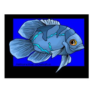 Mooie Blauwe Tropische Oscar Fish Briefkaart
