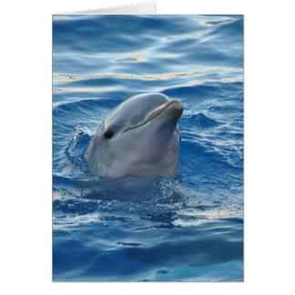 Mooie Dolfijn Notitiekaart