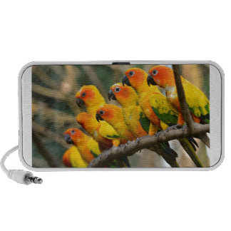 Mooie Geeloranje en Groene Papegaaien iPhone Luidsprekers