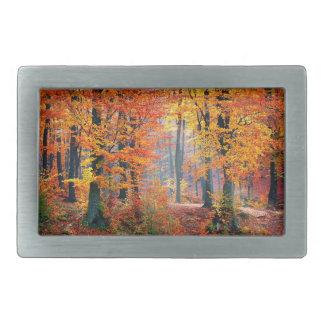 Mooie kleurrijke de herfst boszonnestralen gesp